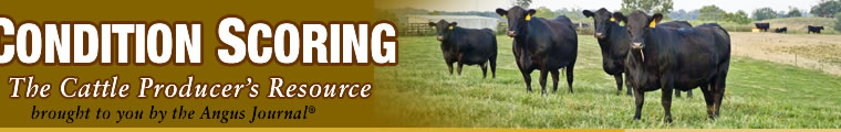 Body Condition Scoring: Cattle Producers Resource